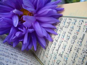 A purple flower on a bible